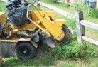 Burma Road Stump grinding services 3