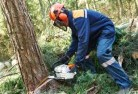 Burma Road Tree cutting services 21